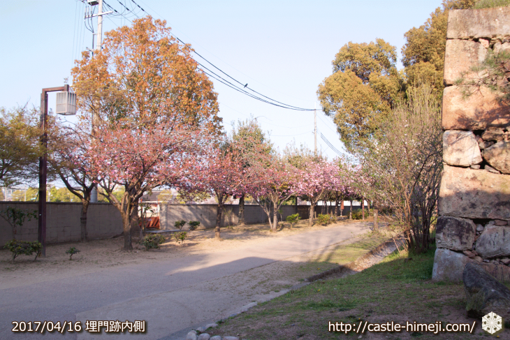 30per-bloom-late-cherry-blossom_04