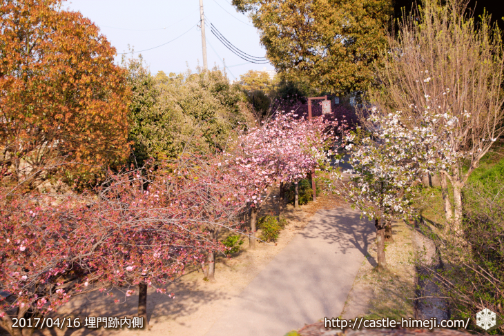 30per-bloom-late-cherry-blossom_05
