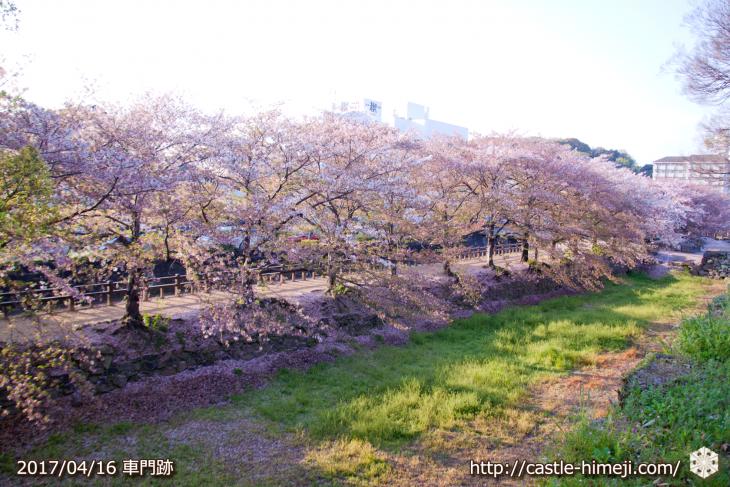 30per-bloom-late-cherry-blossom_06