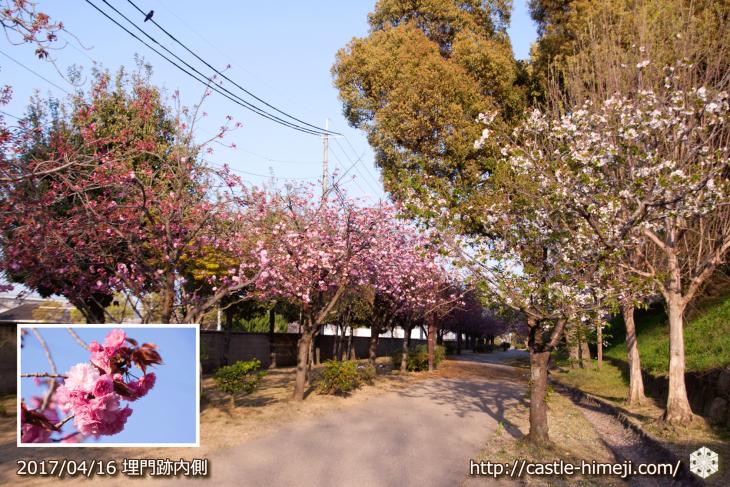 30per-bloom-late-cherry-blossom_08