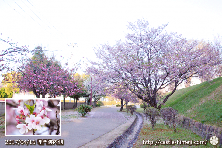 30per-bloom-late-cherry-blossom_09