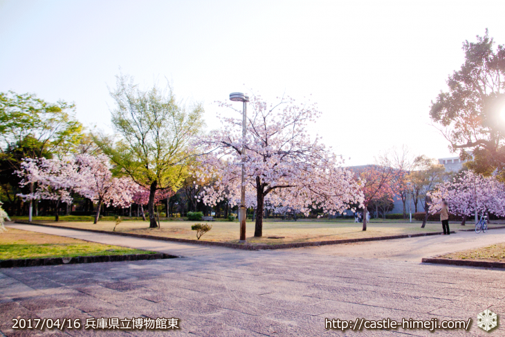 30per-bloom-late-cherry-blossom_10