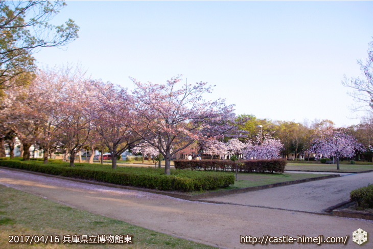 30per-bloom-late-cherry-blossom_11