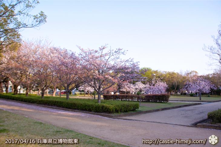 30per-bloom-late-cherry-blossom_11