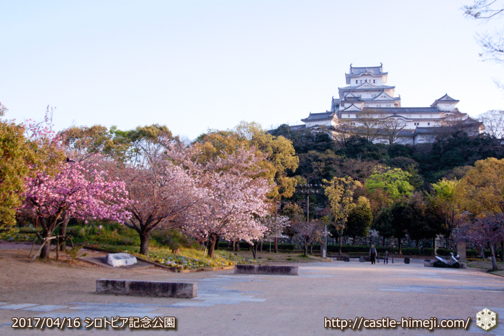 30per-bloom-late-cherry-blossom_14