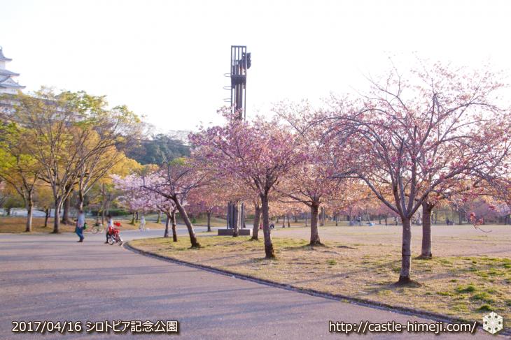 30per-bloom-late-cherry-blossom_15