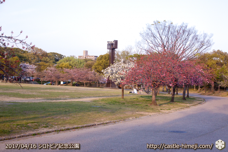 30per-bloom-late-cherry-blossom_17
