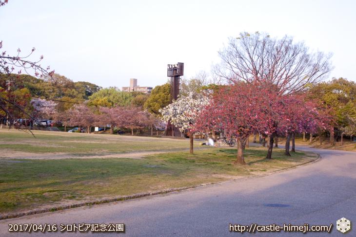 30per-bloom-late-cherry-blossom_17