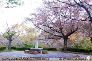 30per-bloom-late-cherry-blossom_20