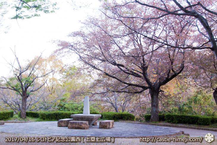 30per-bloom-late-cherry-blossom_20