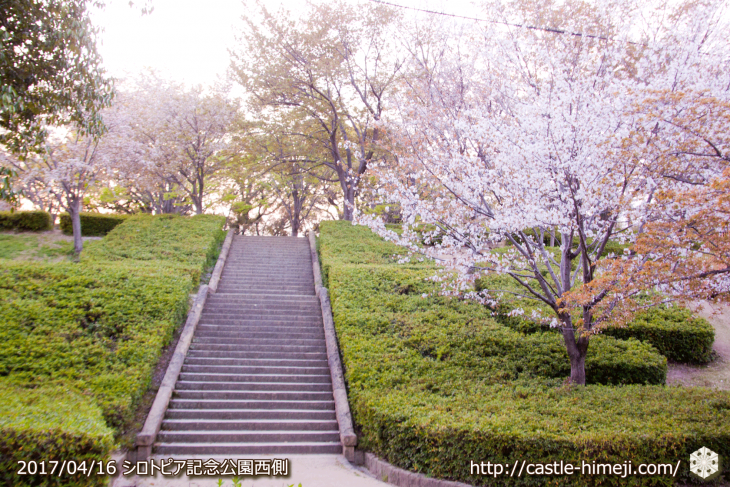 30per-bloom-late-cherry-blossom_23