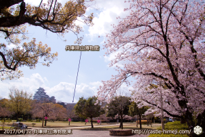 area-of-not-bloom-cherry-blossom_05