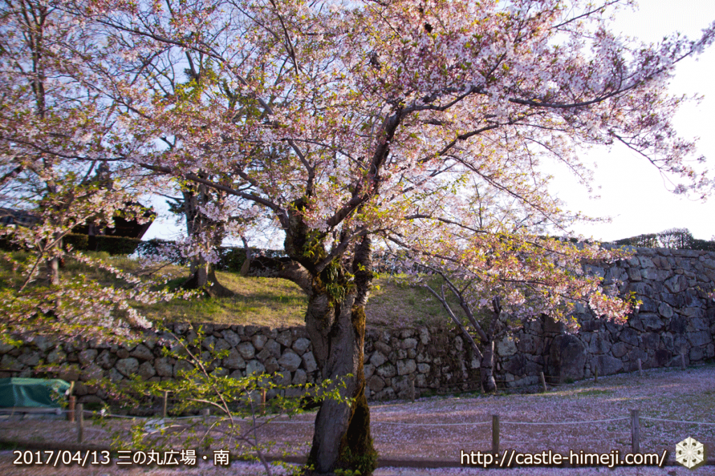 cherry-blossoms-end_01