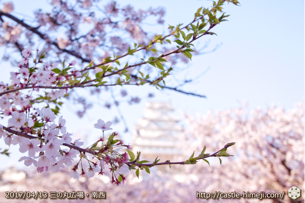 cherry-blossoms-end_03