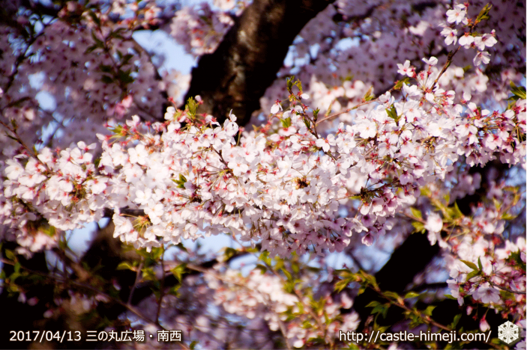 cherry-blossoms-end_04