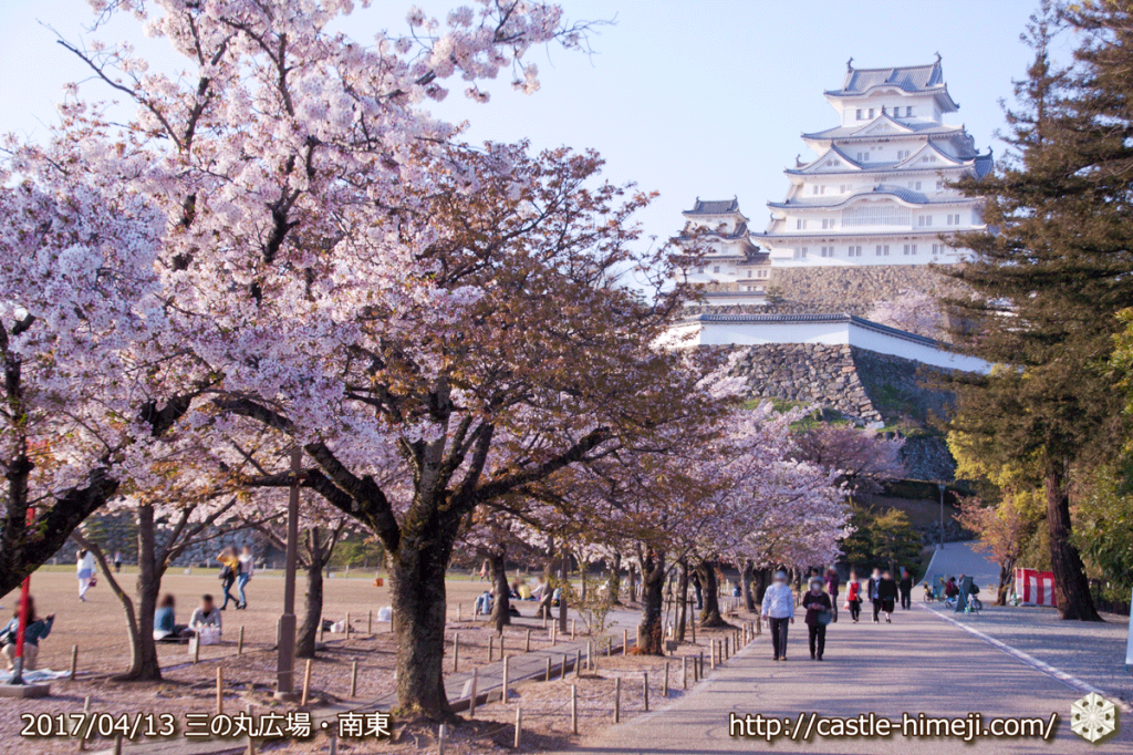 cherry-blossoms-end_06