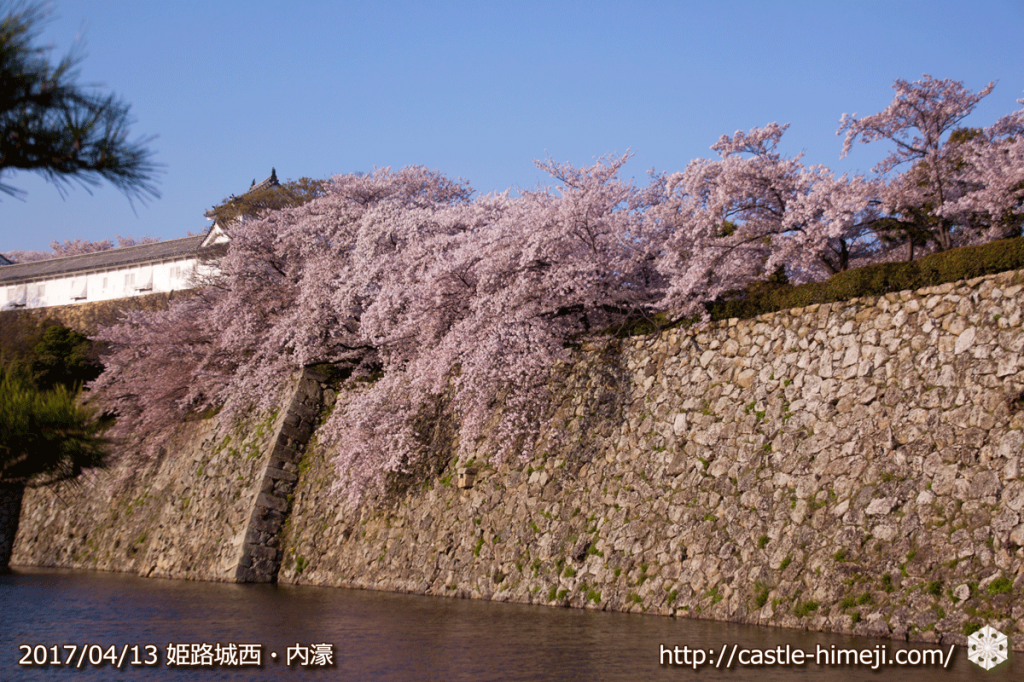 cherry-blossoms-end_07