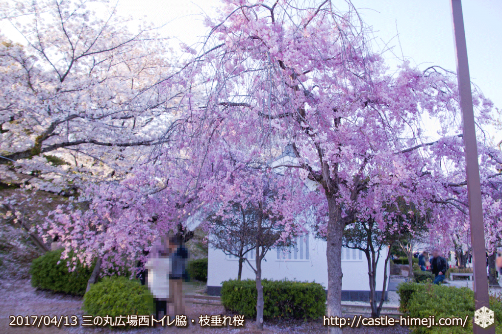 cherry-blossoms-end_08