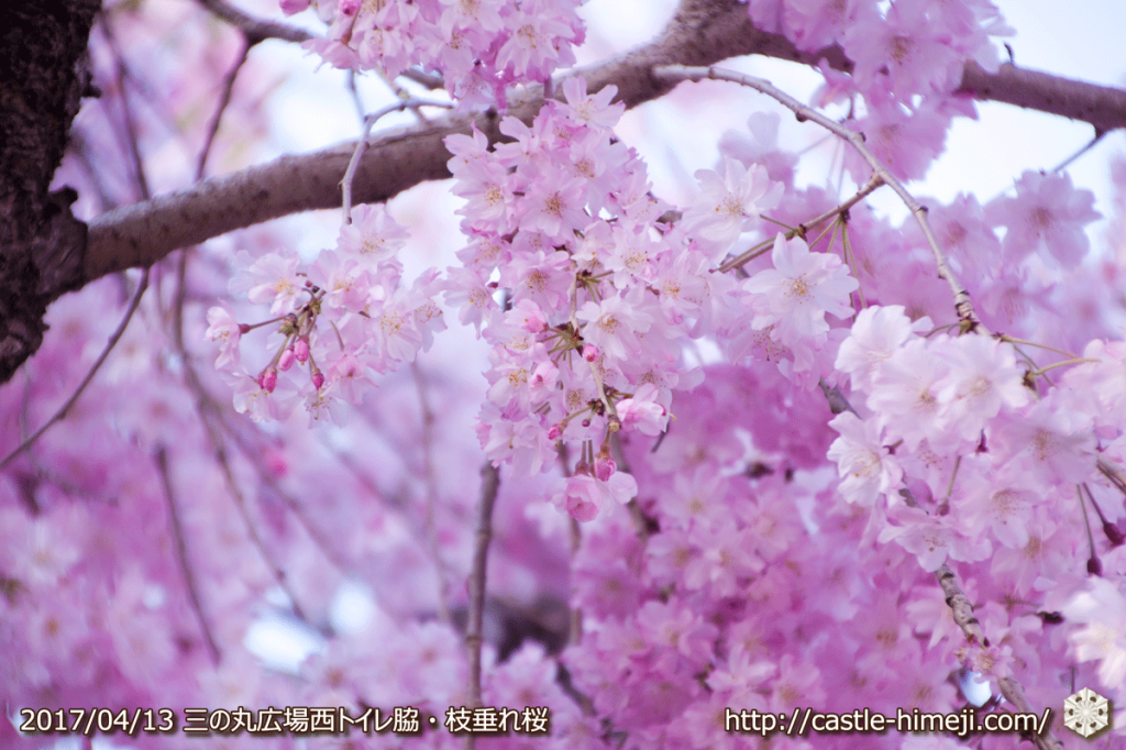 cherry-blossoms-end_09