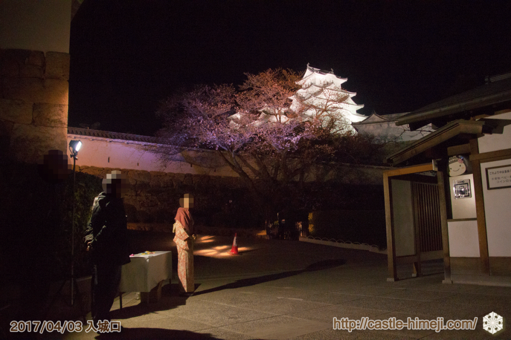 cherry-blossoms-night2017_03