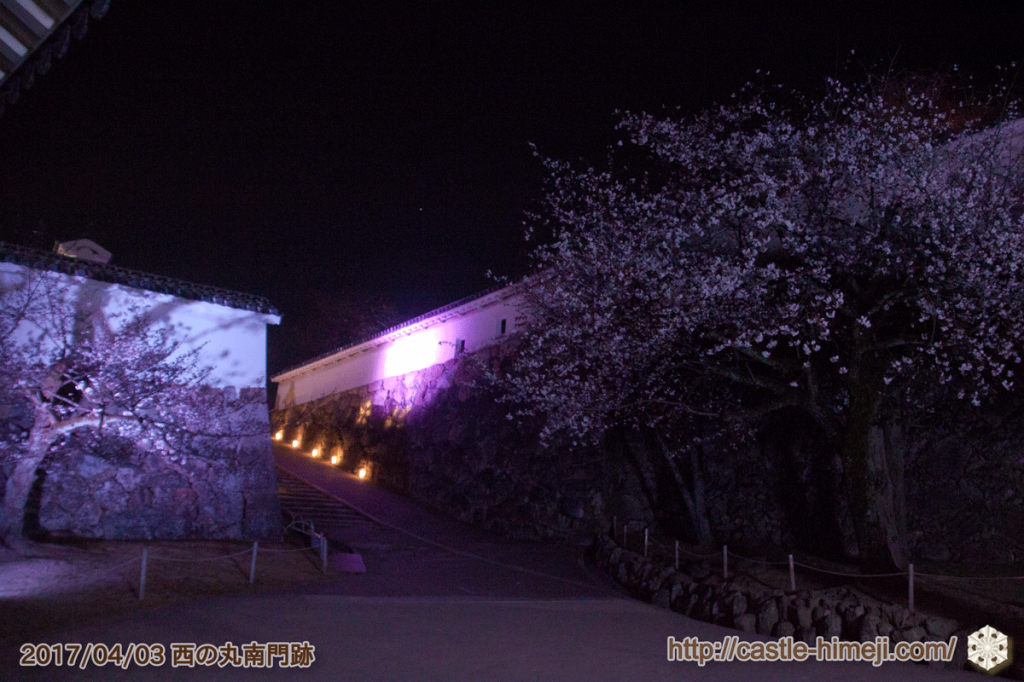 cherry-blossoms-night2017_08