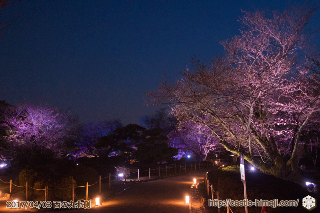 cherry-blossoms-night2017_13