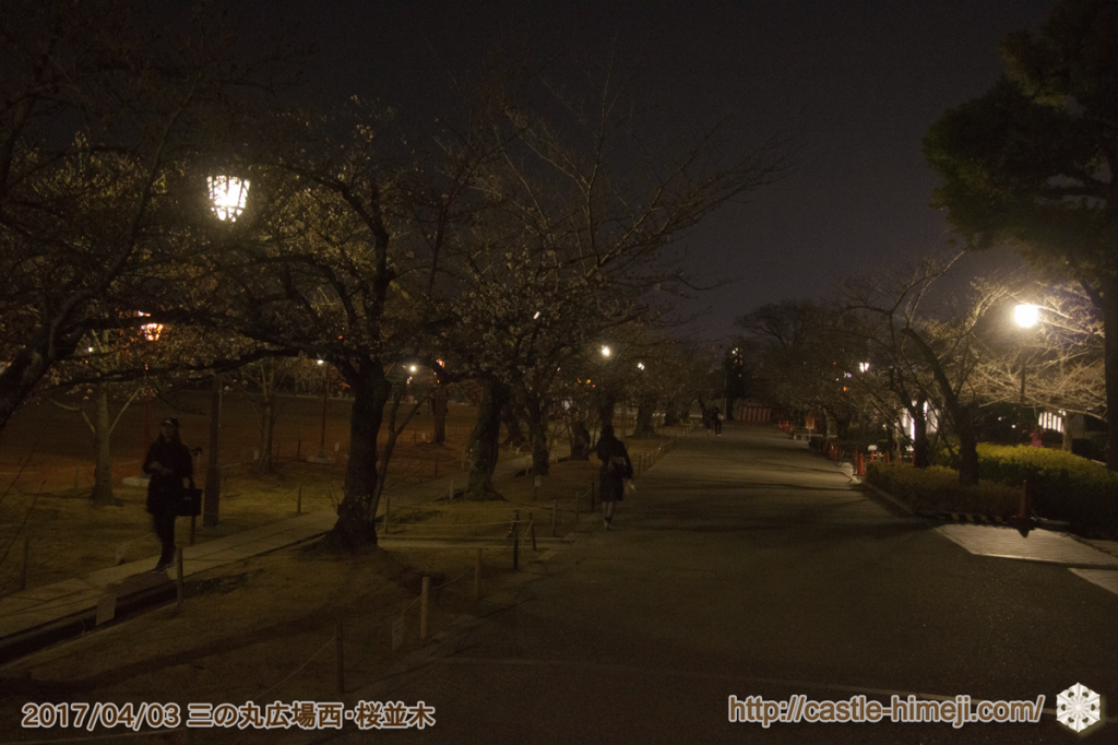 cherry-blossoms-night2017_18