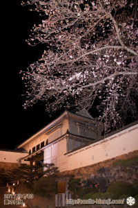 cherry-blossoms-night2017_20
