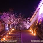 cherry-blossoms-night2017_3rd_01