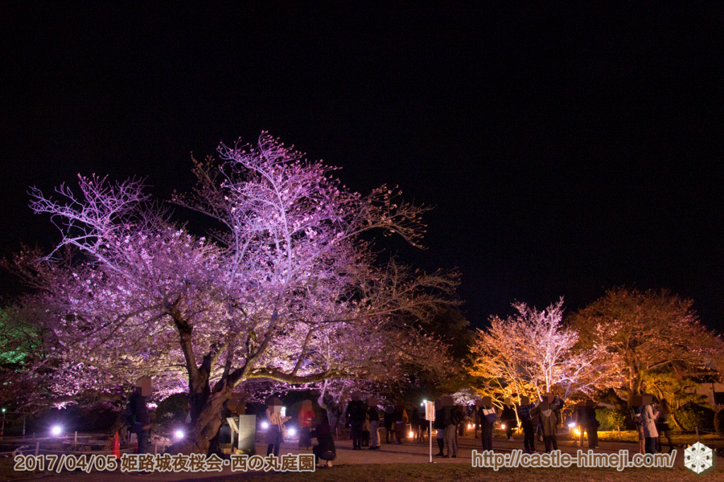 cherry-blossoms-night2017_3rd_04