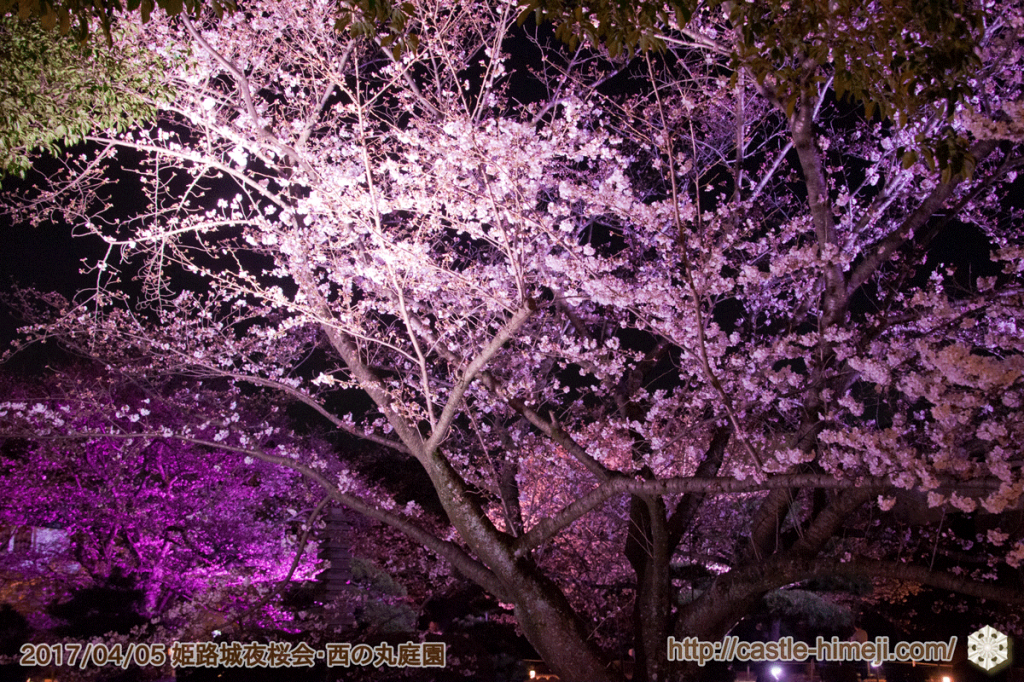 cherry-blossoms-night2017_3rd_05