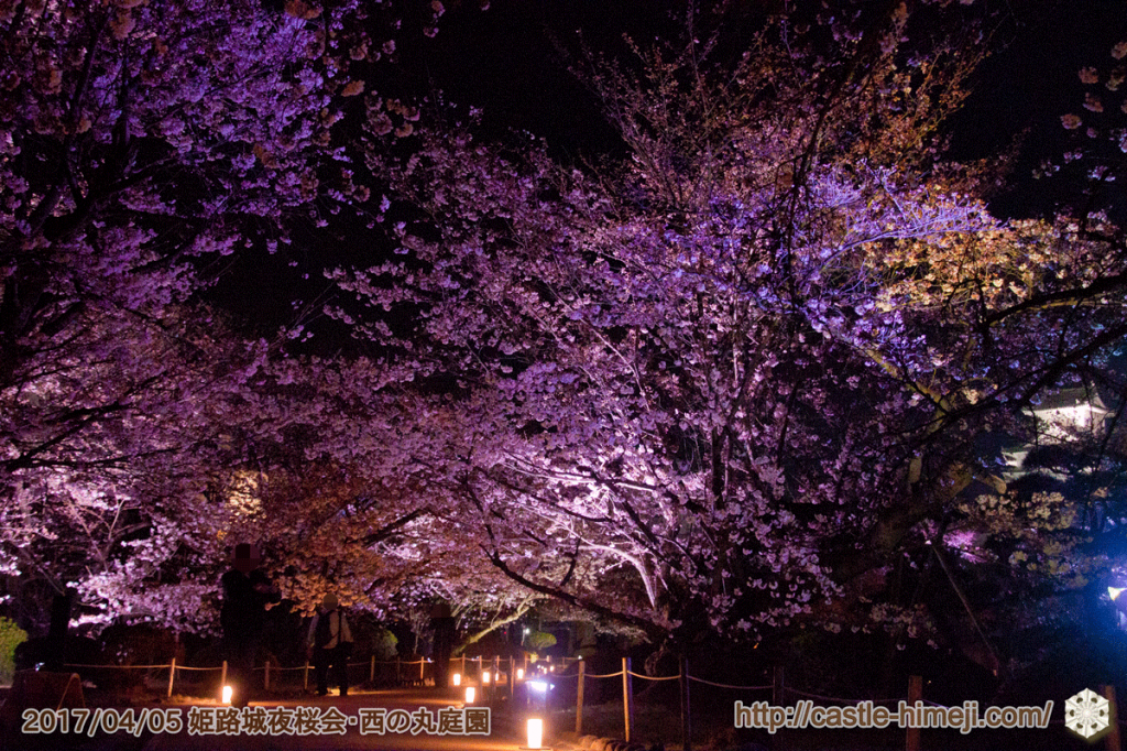 cherry-blossoms-night2017_3rd_06