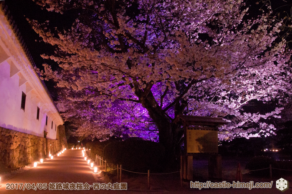 cherry-blossoms-night2017_3rd_07
