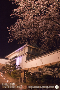 cherry-blossoms-night2017_3rd_11