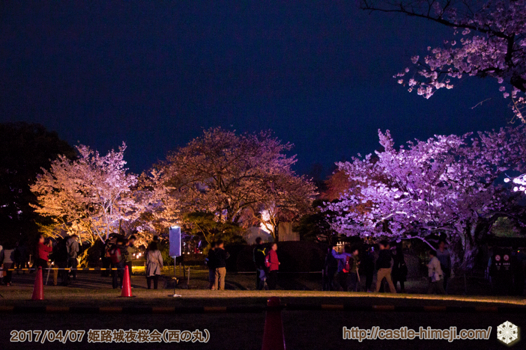 cherry-blossoms-night2017_5rd_06