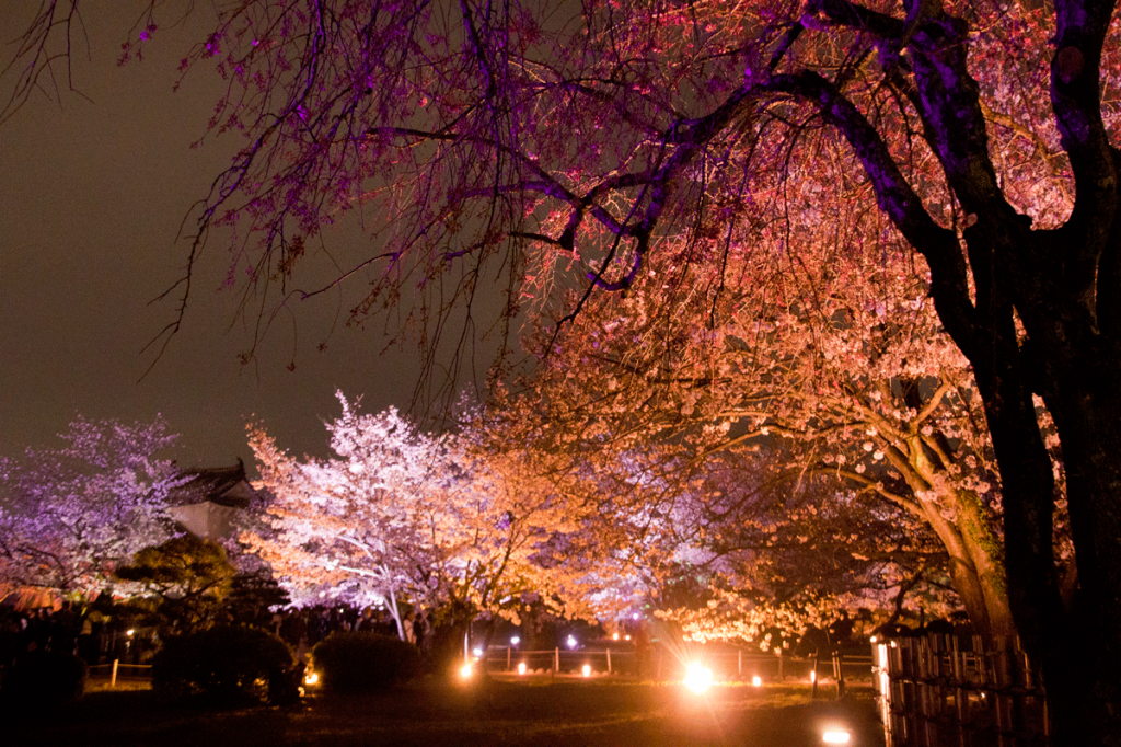 cherry-blossoms-night2017_5rd_10