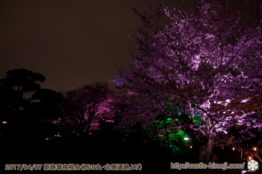cherry-blossoms-night2017_5rd_13