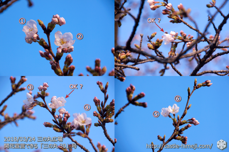 cherry-blossoms20180324_uchi_07