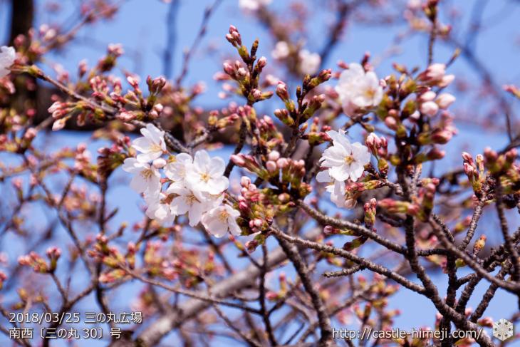 cherry-blossoms20180325_uchi_05