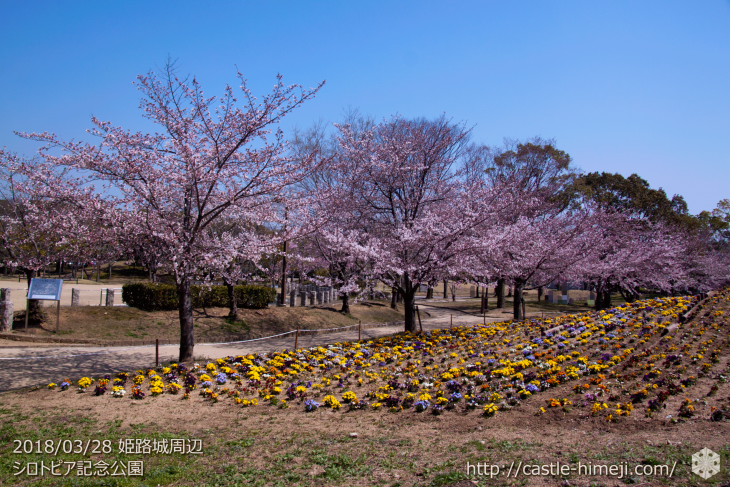 cherry-blossoms20180328_naka1_01