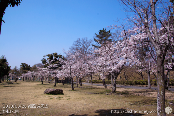 cherry-blossoms20180328_naka1_05