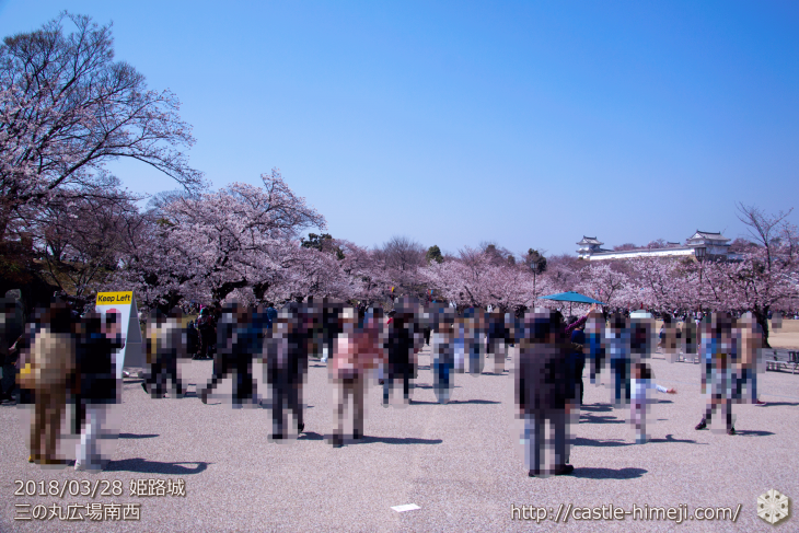 cherry-blossoms20180328_uchi_02