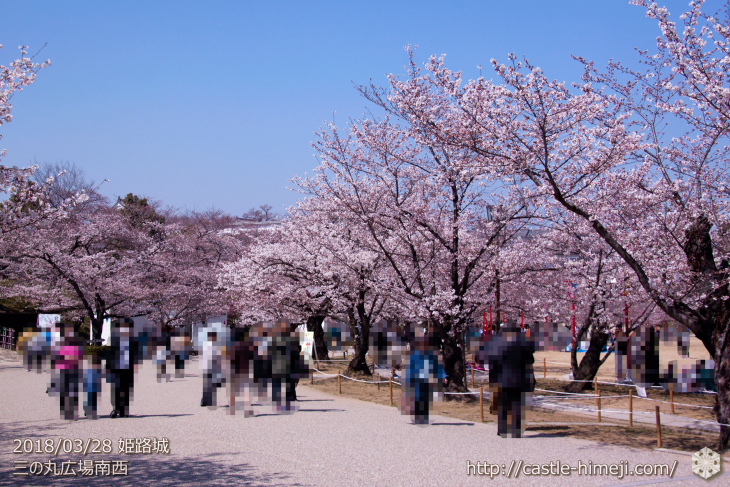 cherry-blossoms20180328_uchi_03