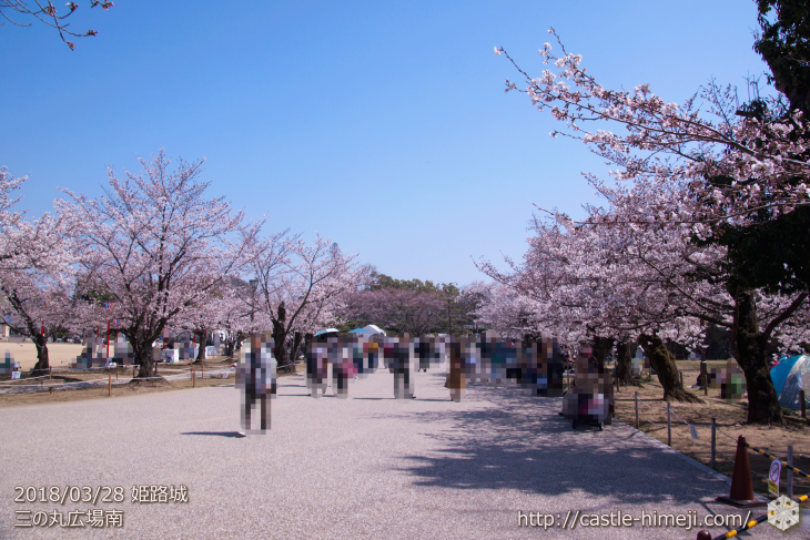 cherry-blossoms20180328_uchi_06