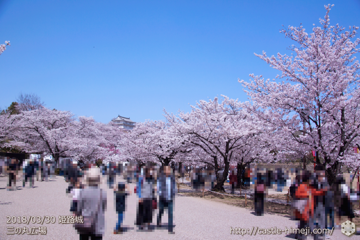 cherry-blossoms20180330_uchi_01