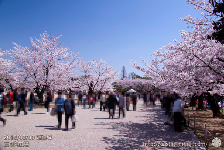 cherry-blossoms20180330_uchi_02