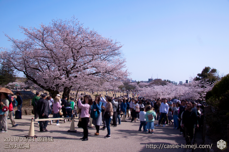 cherry-blossoms20180331_uchi_03