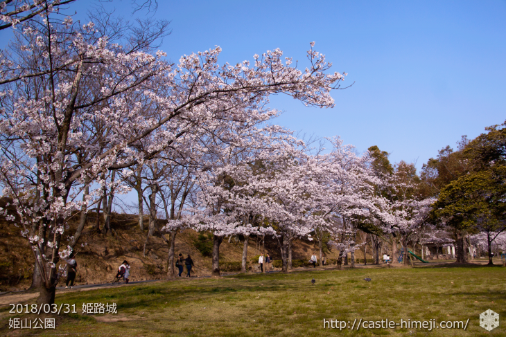 cherry-blossoms20180331_uchi_08