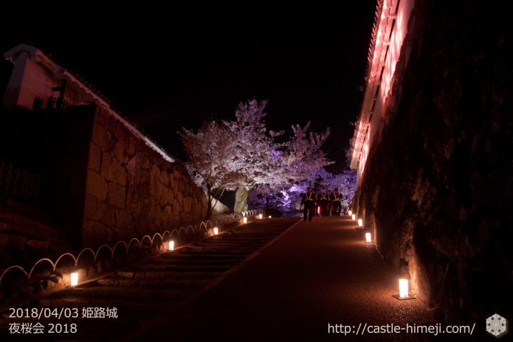 cherry-blossoms-night2018_1st_03