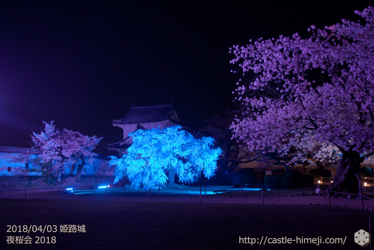 cherry-blossoms-night2018_1st_05